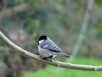 Bird Watching at Kausani